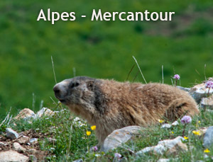 Alpes Mercantour